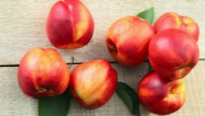 Nectarina - Mudas Enxertadas - Já Produzindo