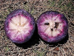 Abiu Roxo - 1 Muda de 1m - Cultivo Livre De Agrotóxicos