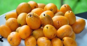 Cajá-manga / Cajamanga - 1 Muda Média - Livre De Agrotóxicos!