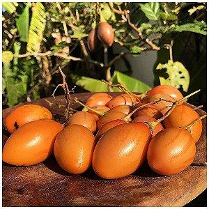 Duas Mudas De Tamarilho (Vermelho e Amarelo) - Tomate de árvore