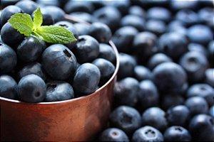 Mirtilo - Climax - Próxima de produzir! - Cultivo livre de agrotóxicos