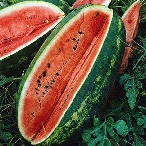 Melancia Congo - 40 Sementes - Isla- Frete grátis