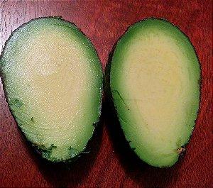 Abacate sem caroço - (Avocado) 1 Muda Pequena - Sem Agrotoxicos