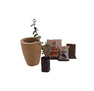 Kit Mãos na terra -  Vaso Safira + Muda de Mirtilo - Pronto para plantar