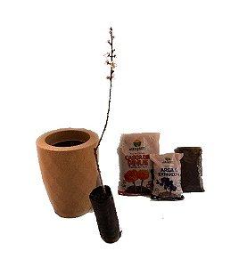 Kit Mãos na terra -  Vaso Safira + Muda de Pêssego - Pronto para plantar