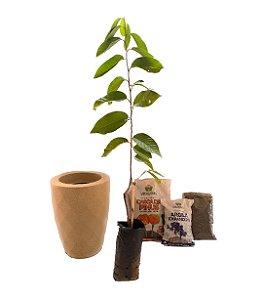 Kit Mãos na terra -  Vaso Safira + Muda de Atemóia - Pronto para plantar