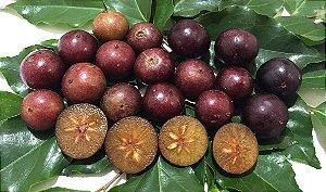 Cereja De Madagascar (flacourtia Indica) - 1 Muda Grande