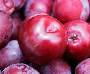 Ameixa Vermelha - 1 Muda Grande - Sem Agrotóxicos