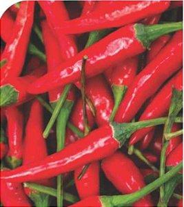 Pimenta Malagueta - 1 Muda - Cultivo Livre De Agrotóxico!