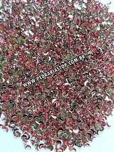 Lua para decoração rosa 2x3 - Aprox. 100 unidades