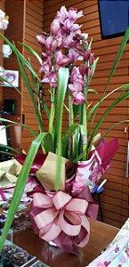 Orquídea Cymbidium Rosa