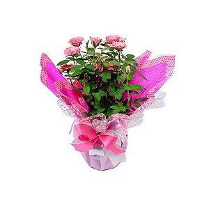 Roseira Mini Rosas