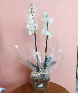 orquidea branca