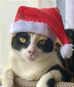 Gorrinho de Natal