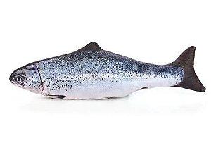 Peixe Truta com Catnip