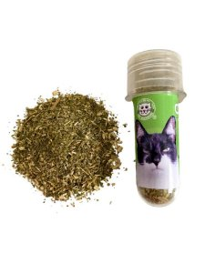 Catnip do Jorginho