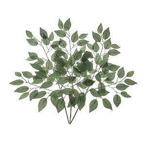 Galho de Folha de Ficus Verde Escuro