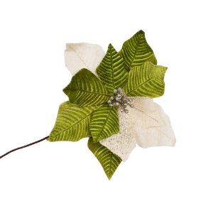 Poinsetia Verde e Branco G209365