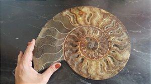 Amonita Fóssil Grande 30 x 25 cm