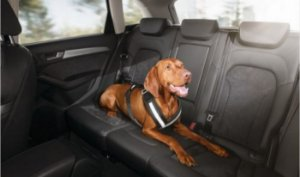 Audi Dog Harness - 15 a 30 kg
