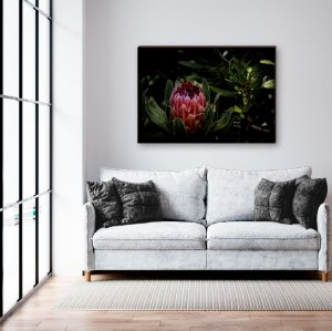 Quadro decorativo Flor Vermelha - Protea [BoxMadeira]