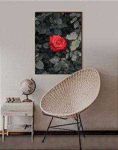 Quadro decorativo Flor Rosa Vermelha [BoxMadeira]