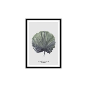 Palmeira Leque [MolduraVidro]
