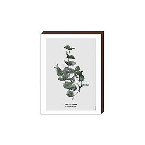 Eucalipto [BoxMadeira]