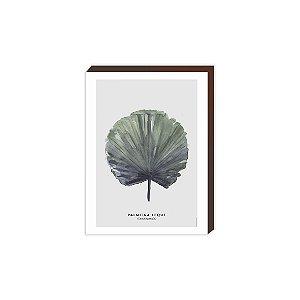 Palmeira Leque [BoxMadeira]