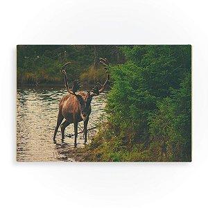 Quadro de Madeira - Moose