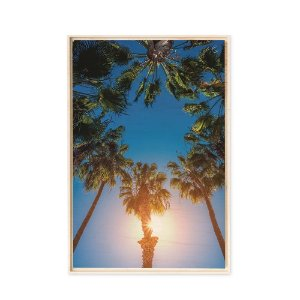 Collection - Palm Trees