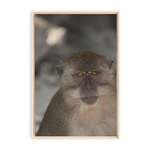 Collection - Krabi Monkey