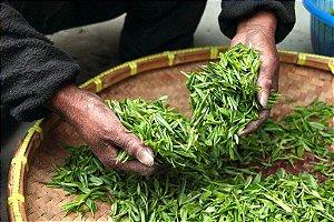 Chá de moringa em folhas a granel