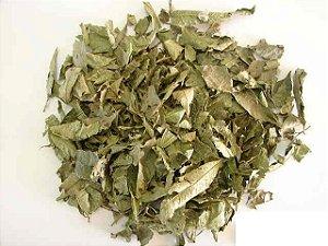 Chá de espinheira santa - a granel