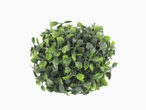 Mini Boxwood Ball 10cm
