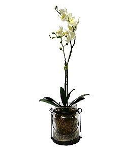 Arranjo Orquidea Phalaenopsis Branca no Vidro 60cm
