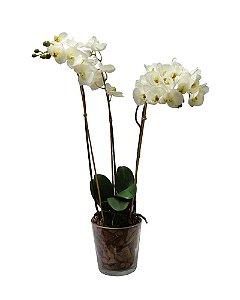 Orquidea Phalaenopsis Branca com Vaso 3 Galhos 65cm