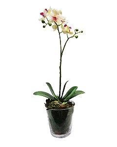 Orquidea Phalaenopsis com Vaso de Vidro 55cm