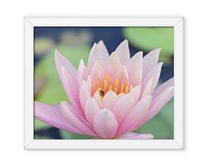 Quadro Flor de Lotus
