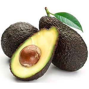 Muda de Abacate Avocado com Cheiro e Sabor de Aniz-Enxertado