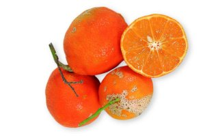 Muda Limão Cravo ou Rosa ou Comum Enxertado