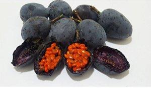 MUDA MARACUJÁ DOCE AZUL de POLPA LARANJA ( Passiflora morifolia )