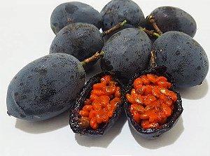 Muda Maracujá Doce Azul-Polpa Laranja ( Passiflora morifolia )