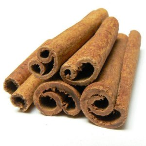 Muda de Canela da Índia ou  caneleira do ceilão (Cinnamomum zeylanicum)