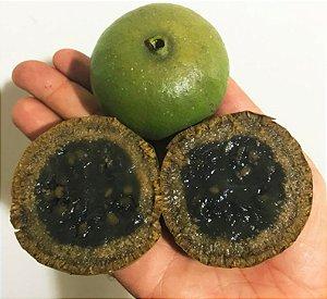 MUDA PURUÍ GRAÚDO ou MARMELADA de BEZERRO ( Alibertia edulis ) MUITO DOCE