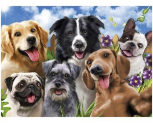 Quebra Cabeça Puzzle 500 Peças Selfie Pets Grow