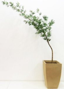 Bambú Mossô