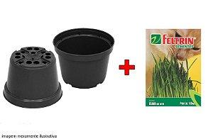 Kit Vaso 11 cm Alta Drenagem + Semente Grama dos Gatos