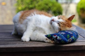 Almofada Al Mare com Catnip