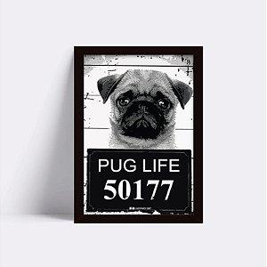 Quadro Pug Procurado